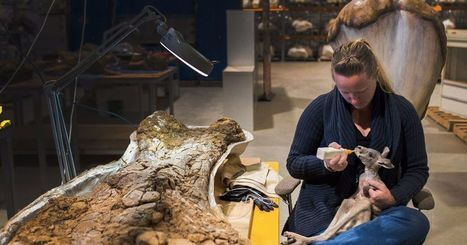 The women who clean dinosaur bones in the Australian outback | Conformable Contacts | Scoop.it