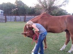 Neck Stretches for Horses - | Equine Bodywork | Scoop.it