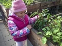 Urban Community Food Project | GMOs & FOOD, WATER & SOIL MATTERS | Scoop.it