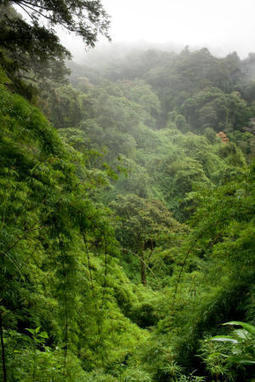 Tropical forests fertilized by nitrogen air pollution, scientists find | Science -Facts and Fiction | Scoop.it
