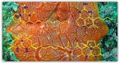 Anti-parasitic Guanidine and Pyrimidine Alkaloids from the Marine Sponge Monanchora arbuscula   LGN   Scoop.it