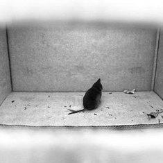 Scientists Plant False Memories in Mice--and Mice Buy It: Scientific American | sciences humaines - sciences cognitives - cerveau - apprentissage - enseignement | Scoop.it