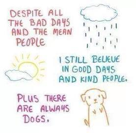 Timeline Photos - Dirty Dog Self-serve Dogwash and Grooming | Facebook | All Things Dog | Scoop.it