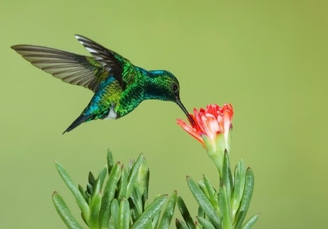 Why Google's New Hummingbird Algorithm is Good News for Serious Content Creators | Writer, Book Reviewer, Researcher, Sunday School Teacher | Scoop.it