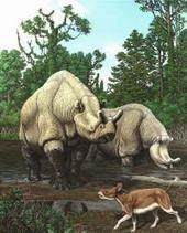 Over 65 million years North American mammal evolution has tracked with climate change | anti dogmanti | Scoop.it