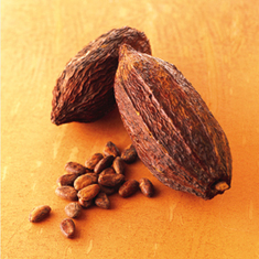 Is Cocoa the Brain Drug of the Future?: Scientific American | On the Plate | Scoop.it