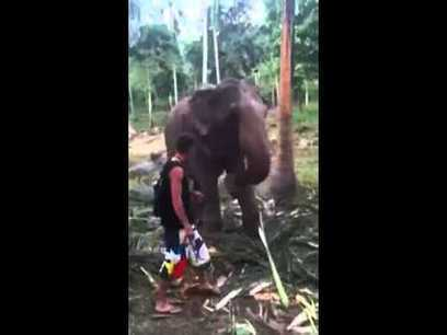 Elephant Smacks Friendly Guy For Getting Too Close   The Pit Boss   Scoop.it
