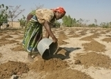 Major boost for Zimbabwe's sustainable agricultural development and food security efforts | Food Situation - globally | Scoop.it