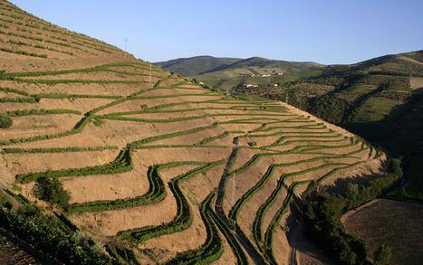 Symington Family Estates | The Douro Index | Scoop.it