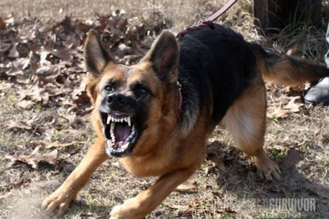 12 Dog Breeds for Personal & Home Protection   Safety   Scoop.it