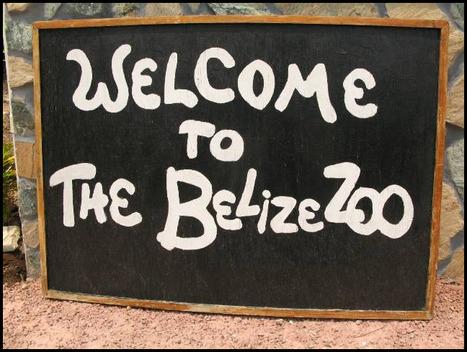 Belize Zoo Night Tour   belize   Scoop.it