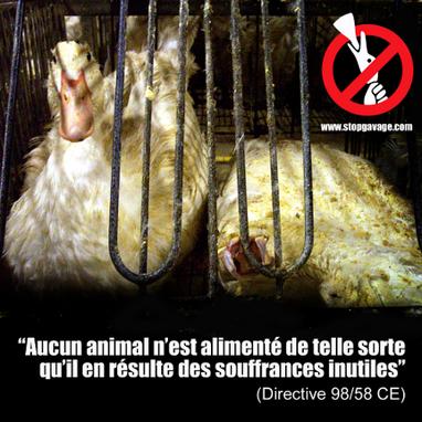 Une info par jour #12 | Stop Gavage | Nature Animals humankind | Scoop.it