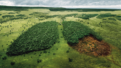 Norway Becomes World's First Country to Ban Deforestation | #Sustainability | Scoop.it