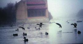 Más de 20.000 aves de un centenar de especies rebosan las Lagunas de Villafáfila - La Opinión de Zamora | El reino animal U.E.F. Fray B. de las Casas S. | Scoop.it