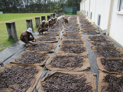SPECIAL REPORT: Crisis in the Vanilla Market | MANE on the web | Scoop.it