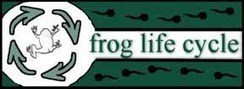 Frog Life Cycles | Second Grade Unit Resources on Life Cycles | Scoop.it