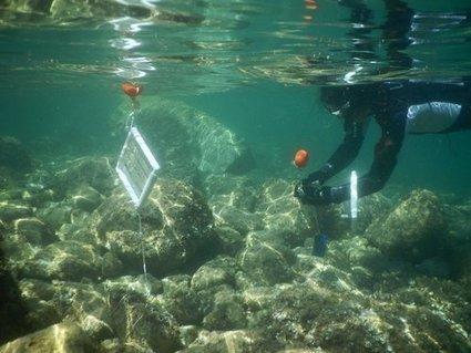 Ostreopsis, l'algue toxique qui menace les plages azuréennes | Toxique, soyons vigilant ! | Scoop.it
