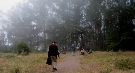 Mount Sutro Forest: Sounds of the Cloud Forest | DESARTSONNANTS - CRÉATION SONORE ET ENVIRONNEMENT - ENVIRONMENTAL SOUND ART - PAYSAGES ET ECOLOGIE SONORE | Scoop.it