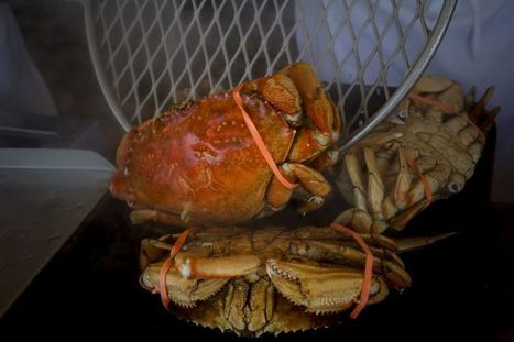 Health warning lifted for Dungeness crab from areas of state | Coastal Restoration | Scoop.it