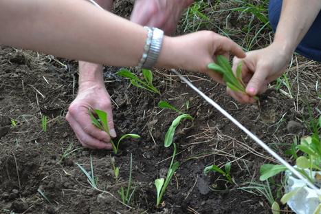 Agricultura social, un potencial a explotar | Agricultura | Scoop.it