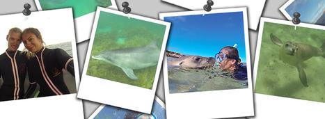 Dauphins et lions de mer : des rencontres inoubliables | Travel - Voyage | Scoop.it