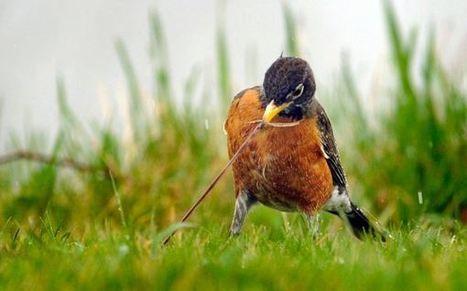 Descubren que las especies interactúan siguiendo un patrón común - Informe21.com (Sátira)   la evolución de los organismos   Scoop.it