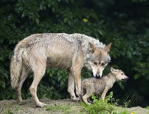 Parco Nazionale della Sila: foreste, laghi e lupi   Viaggi e vacanze in Calabria   Scoop.it