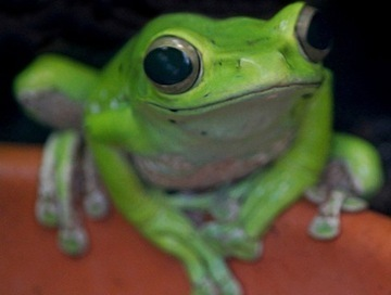 New Study: Common Pesticides Kill Frogs on Contact | Farming, Forests, Water & Fishing (No Petroleum Added) | Scoop.it