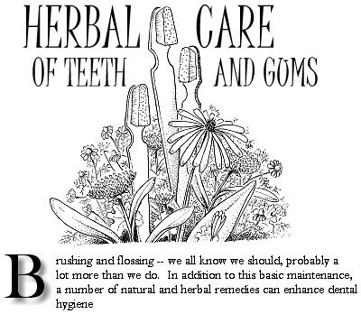 Herbal Care of Teeth and Gums | D.I.Y. Herbalism | Scoop.it