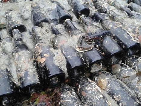 Vendanges maritimes à Saint-Malo. «Le fond de la mer est une cave idéale» | Le vin quotidien | Scoop.it