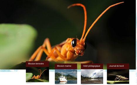 Expédition Papouasie Nouvelle Guinée   EntomoNews   Scoop.it
