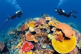 Grief for Great Barrier Reef, say environmentalists | 1. Introduction to Ecos 2014 | Scoop.it