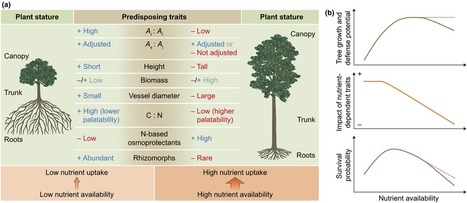 The role of nutrients in drought-induced tree mortality and recovery - Gessler - 2016 - New Phytologist - Wiley Online Library | Transport in plants and fungi | Scoop.it