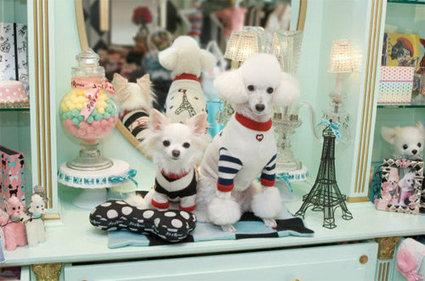 จับน้องหมาสี่ขา...มาแต่งตัวให้น่ารัก | dog | Scoop.it