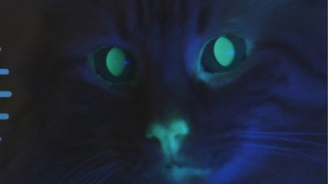 Glowing green cats part of Audubon Center's legacy of species preservation - Raw Story | Animal Abuse | Scoop.it