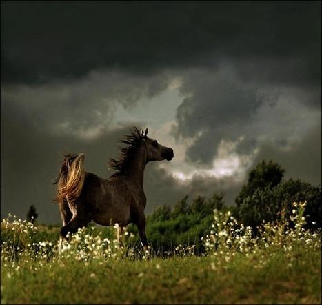 30 Amazing examples of Equine Photography   Machinimania   Scoop.it