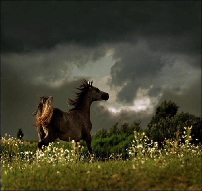 30 Amazing examples of Equine Photography | Machinimania | Scoop.it