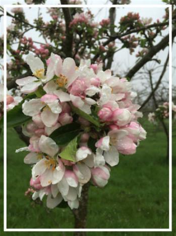 Highbank Blossom Walk in aid of Kilkenny Carlow Home Care Team | Food | Scoop.it