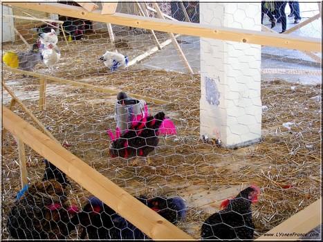 Des poules à la BAC   Photos de LYonenFrance   LYFtv - Lyon   Scoop.it