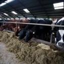 USA L'industrie de la viande consomme quatre cinquième des antibiotiques | Actus Bien-être - Santé | Scoop.it
