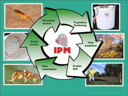 Effective 4-Tiered Approach to Integrated Pest Management | R.I.P. Pest Management | Pest Exterminator Northern Beaches | Scoop.it