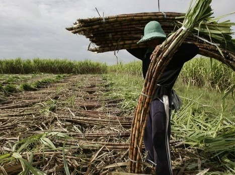 UN Report Calls For Radical, Democratic Food System | Food issues | Scoop.it