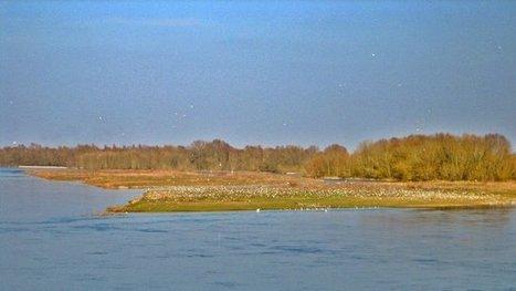 Où sont passées les sternes de l'Ile aux Oiseaux ? | Biodiversité | Scoop.it
