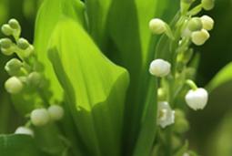 Le premier mai, fête du travail et fête du muguet | FLE et nouvelles technologies | Scoop.it