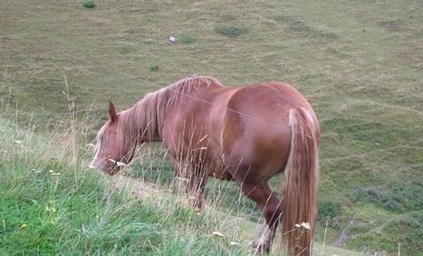 12èmes journées de l'élevage du cheval et du poney de sport à Nérac ! | Agriculture Aquitaine | Scoop.it