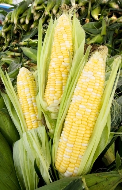 Study results raise questions about genetically modified foods | Women Success | Scoop.it