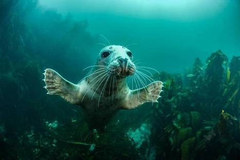 Winners of the 2016 British Wildlife Photography Awards | Chronique d'un pays où il ne se passe rien... ou presque ! | Scoop.it