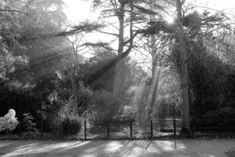 Hiver au Jardin des Plantes   Philippe Gassmann Photos   Scoop.it