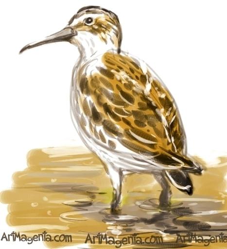 Bird of the Day: Broad-billed Sandpiper   Birding in the news   Scoop.it