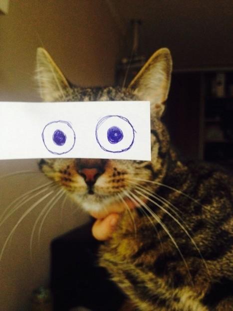 Au Japon, ces maîtres s'amusent à changer le regard de leurs chats façon manga ! | Curiosités planétaires | Scoop.it